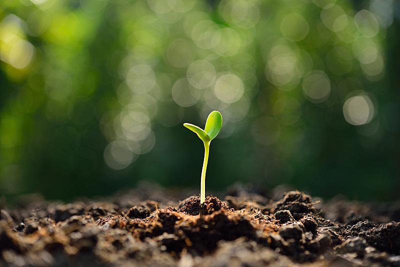 绿色,秧苗,水,留白,新的,水平画幅,无人,泥土,户外,想法