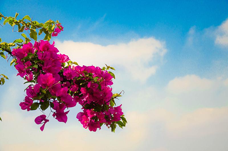 花朵,埃及,自然,天空,水平画幅,绿色,无人,蓝色,城市天际线,户外