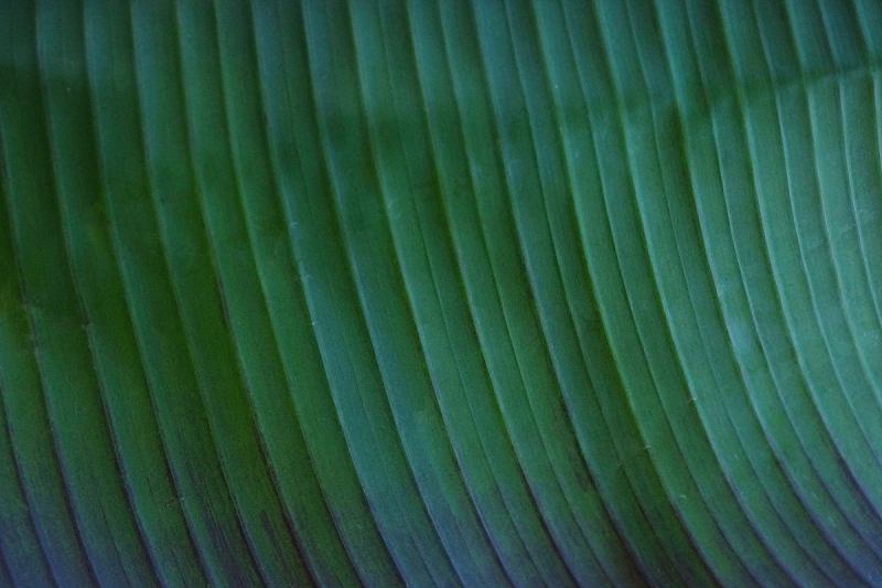 特写,纹理,自然,绿色,背景,部分,概念,香蕉,透明,图像