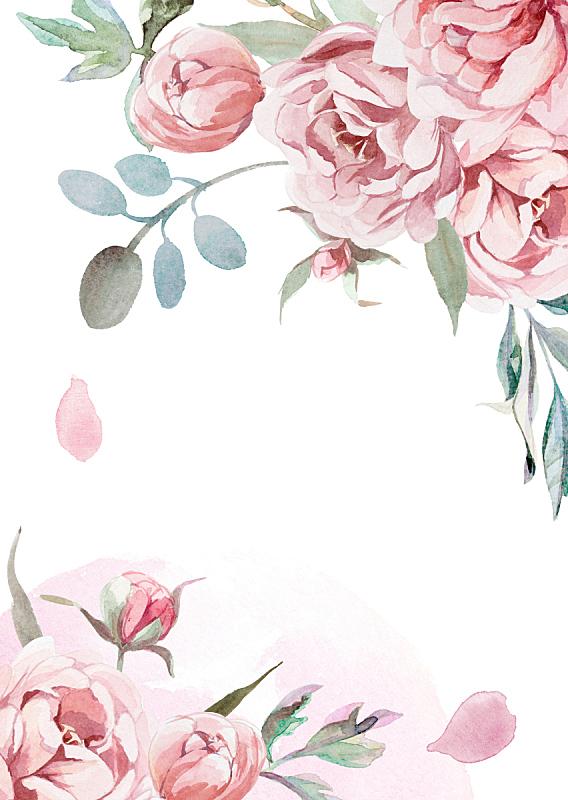 牡丹,贺卡,粉色,白色背景,草,灰色,玫瑰,水彩画,光,水彩画颜料