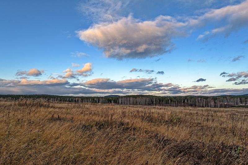 草,背景,天空,草地,地形,森林,干的,秋天,农业,食品