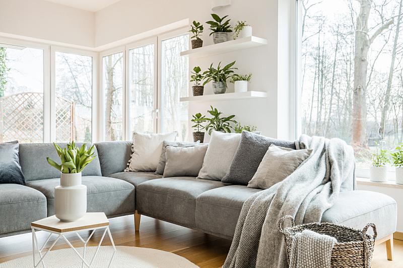 郁金香,沙发,白色,角落,清新,窗户,灰色,室内,起居室,枕头