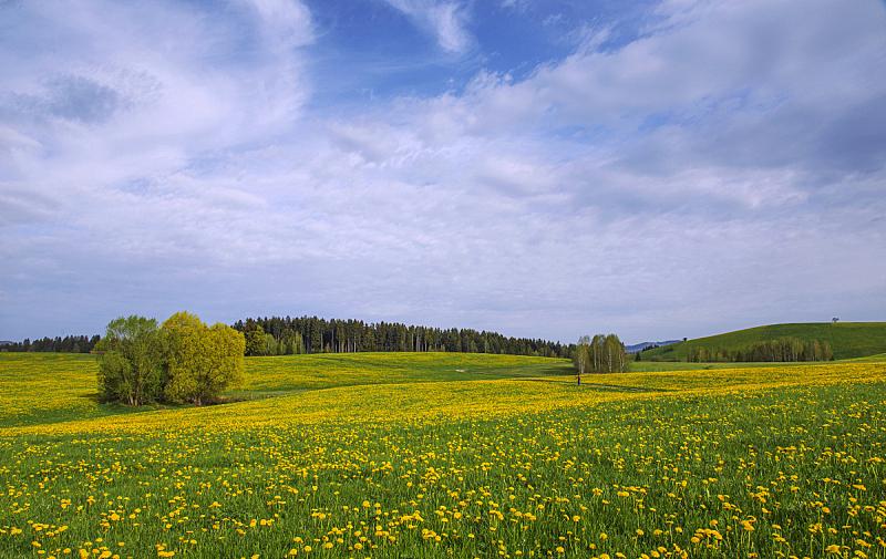 草原,春天,蒲公英,水平画幅,地形,无人,户外,野生植物,德国,摄影