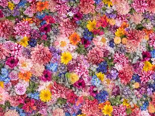 仅一朵花,围墙,背景,停车楼,花头,情人节卡,花朵,多色的,花束,粉色