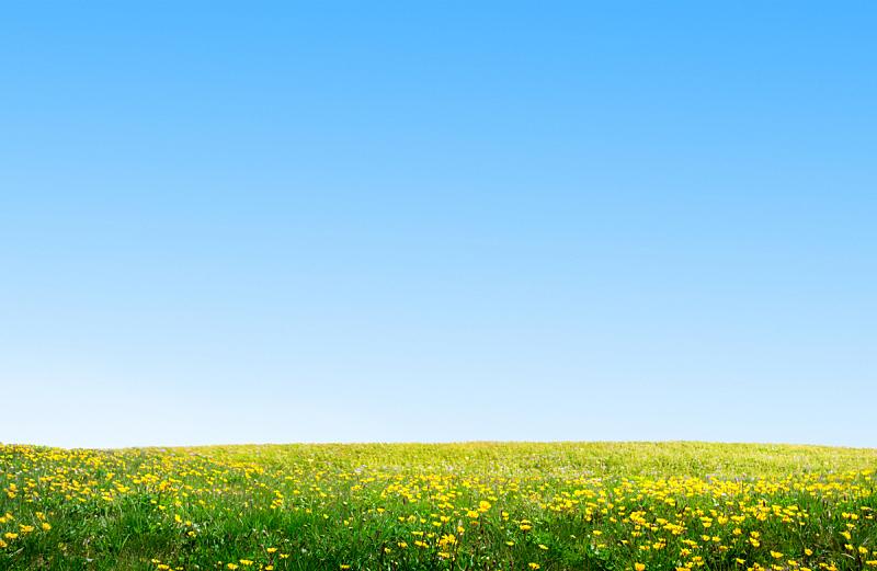 草,地形,田地,自然,草坪,保加利亚,图像,春天,无人,背景
