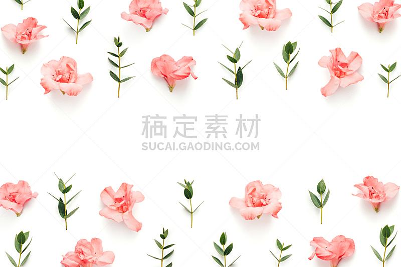 边框,柔和,叶子,绿色,白色背景,粉色,美,贺卡,留白,水平画幅