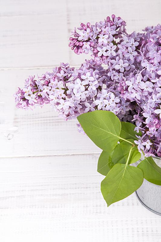 仅一朵花,花束,白色,木制,丁香花,背景,垂直画幅,贺卡,边框,无人