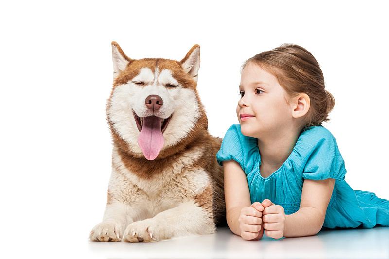 女孩,雪橇犬,纯种犬,水平画幅,快乐,家畜,蓝色,白色背景,人,婴儿