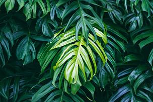 夏天,植物,叶子,自然,暗色,森林,背景,鸡尾酒,概念,绿色