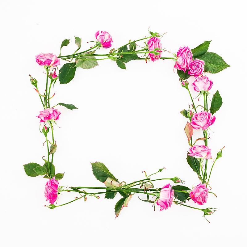 边框,白色背景,方形画幅,粉色,叶子,平铺,风景,花,上装,构图
