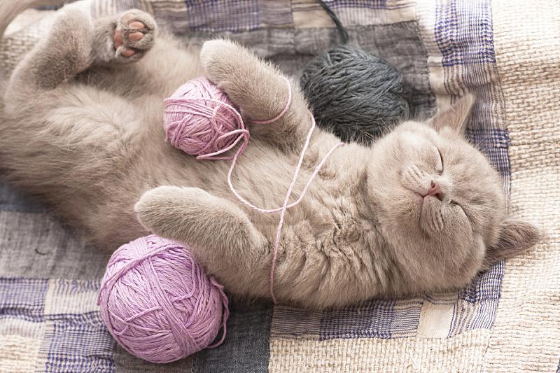 小猫,羊毛线球,短毛猫,猫,灰色,水平画幅,灰发,幽默,宠物,彩色图片