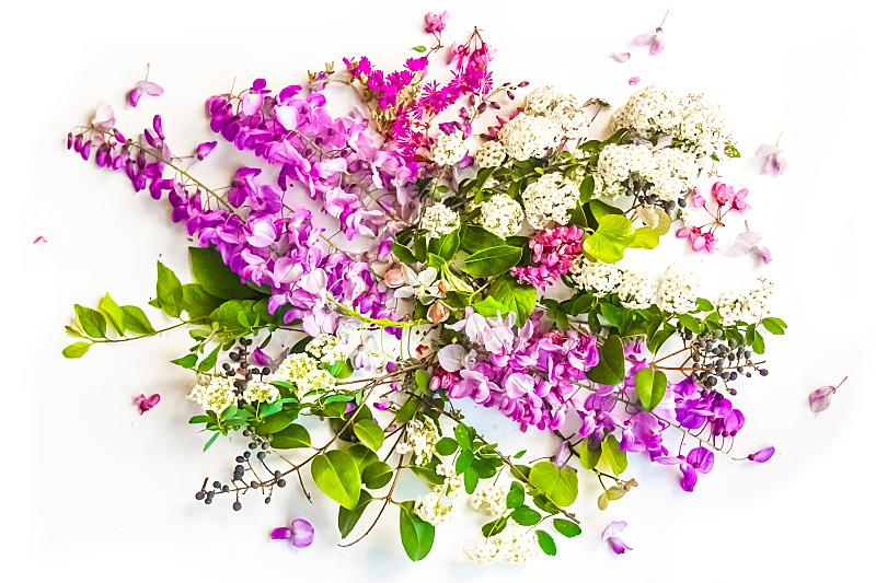 仅一朵花,背景,春天,贺卡,优美,标签,夏天,明亮,花束,白色