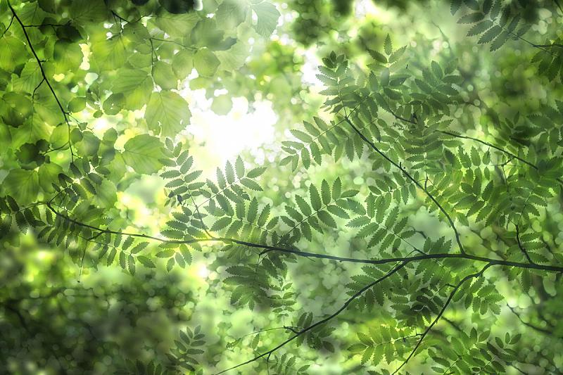 自然,绿色,抽象,白花楸,可持续资源,枝繁叶茂,环境保护,水平画幅,能源,无人
