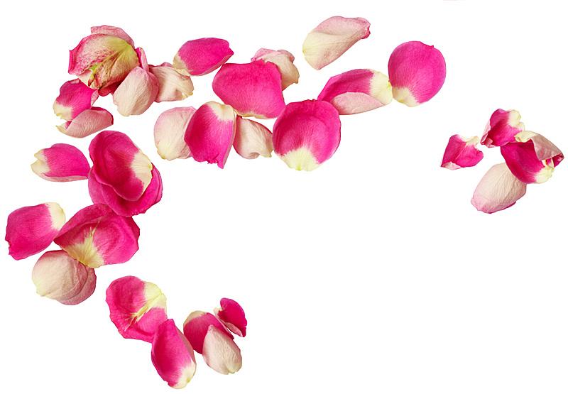 粉色,玫瑰花瓣,玫瑰,周年纪念,清新,背景分离,浪漫,植物,背景,节日
