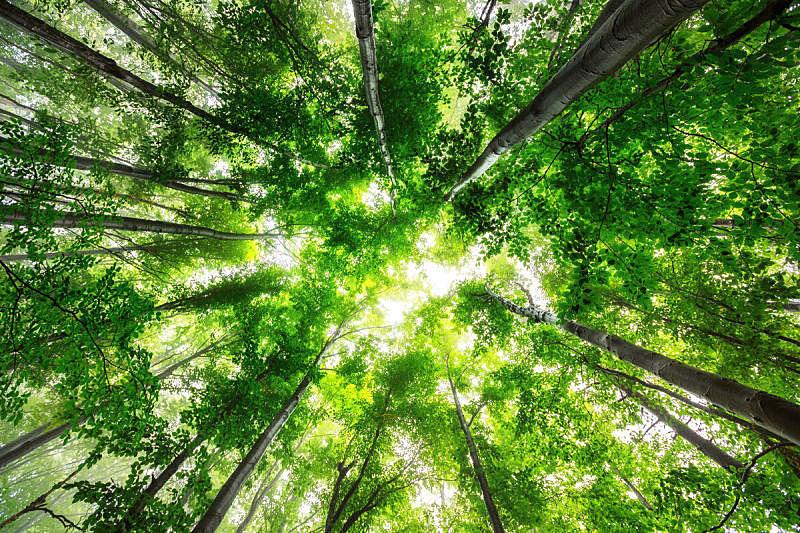 森林,雾,早晨,日光,春天,自然,自然美,环境保护,太阳,灌木