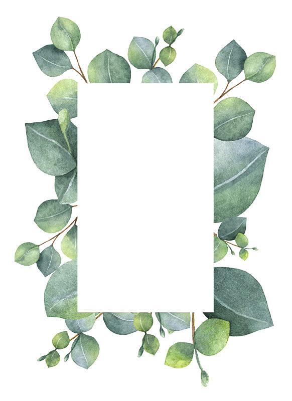 贺卡,绿色,桉树,枝,叶子,分离着色,白色背景,水彩画,发财树,花