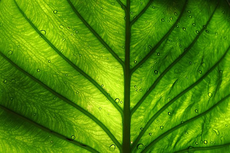 明亮,叶子,绿色,水平画幅,无人,湿,阴影,叶脉,复杂,特写