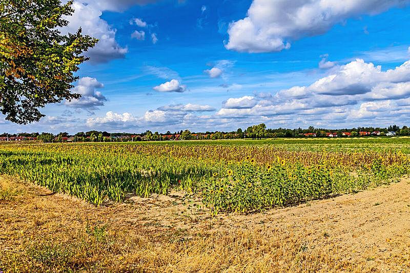 云,向日葵,天空,田地,地形,蓝色,向日葵属 ,柏林,背景分离,色彩鲜艳