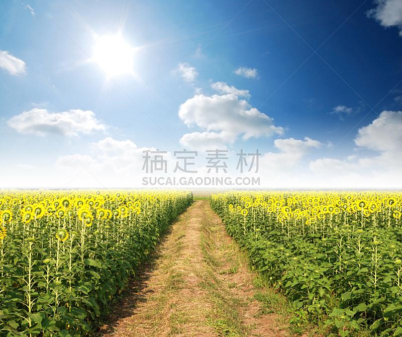 向日葵,日光,时间,水平画幅,透过窗户往外看,无人,夏天,户外,仅一朵花,都市风景