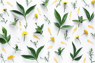 白色背景,花纹,水平画幅,无人,夏天,组物体,特写,明亮,白色,植物