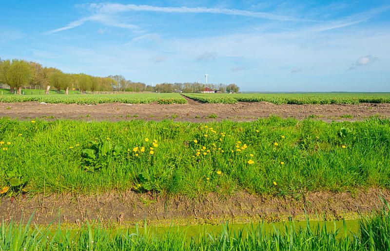 天空,郁金香,蓝色,春天,田地,日光,低视角,自然,水平画幅,地形