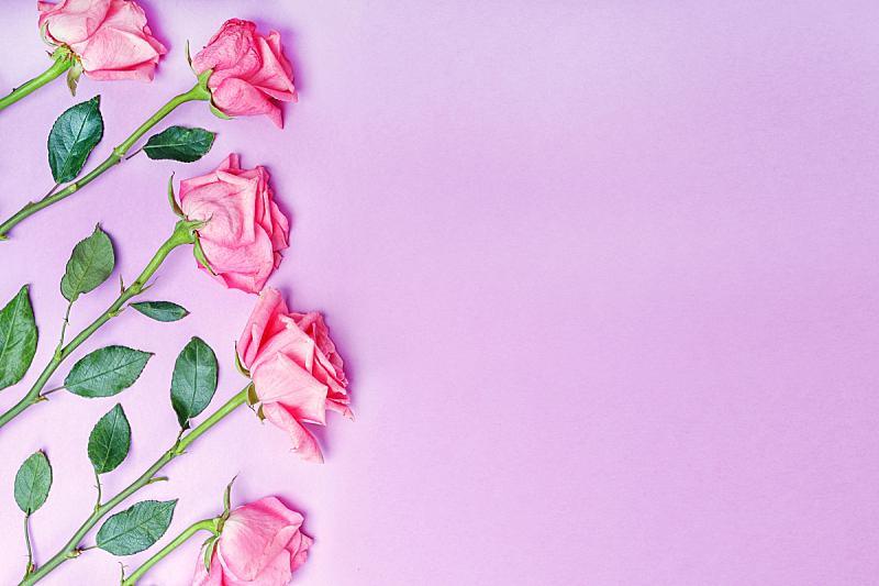 玫瑰,贺卡,婚礼,生日,粉色,留白,粉色背景,华丽的,浪漫,情人节卡