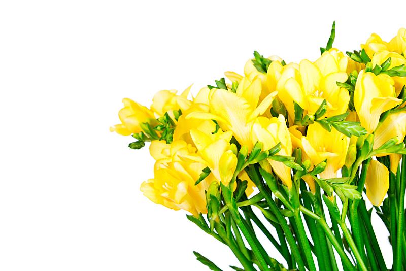 小苍兰,自然,水平画幅,绿色,无人,色彩鲜艳,白色背景,特写,影棚拍摄,花束
