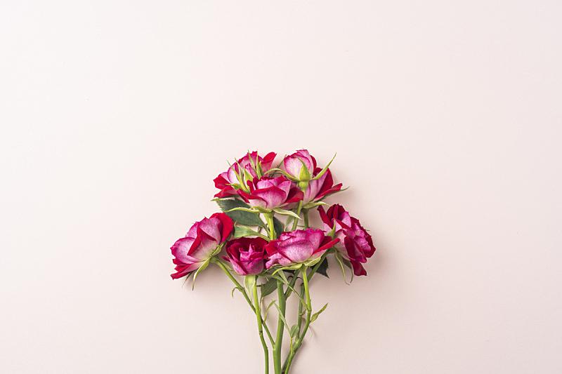 情人节,白昼,红色,玫瑰,母亲,视角,浪漫,简单,复古风格,模板