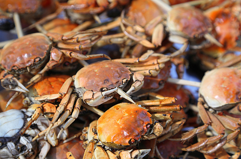 螃蟹,自然,饮食,煮食,水平画幅,无人,膳食,海产,彩色图片,晚餐