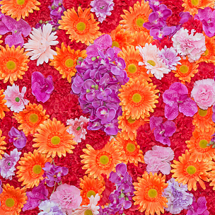 背景,抽象,美,无人,紫苑,夏天,特写,泰国,花束,植物