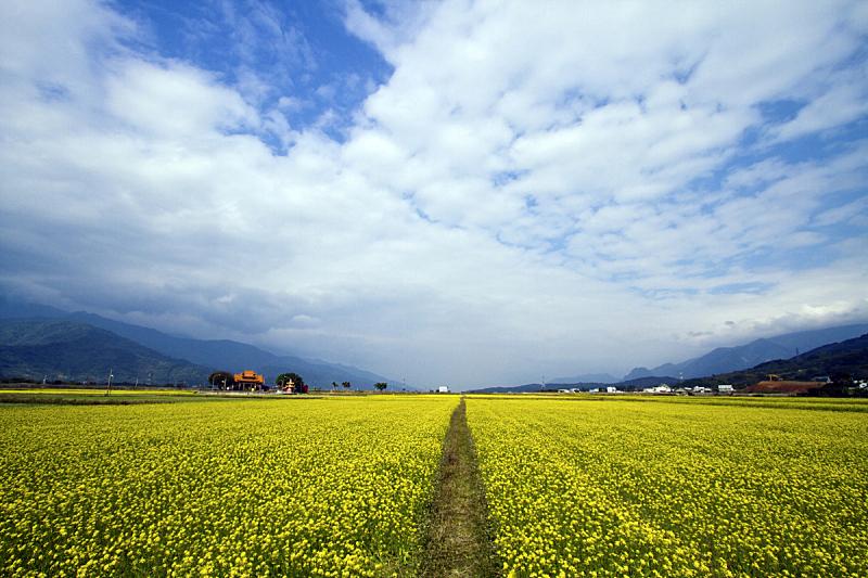 田地,油菜花,天空,美,水平画幅,夏天,户外,农作物,植物,农业