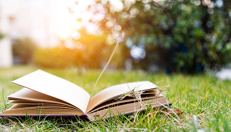 书,日记,平装书,迷路,开着的,草原,草,智慧,大学