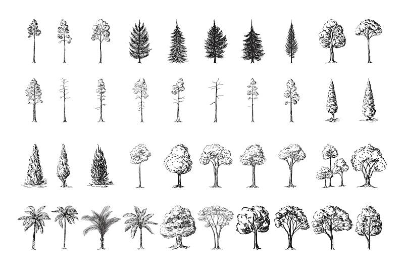 白色背景,雪松,橡木,橡树,松树,桉树,橡树叶,松木,松科,树