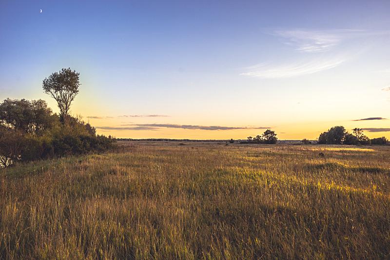 夏天,金色,田地,平原,月亮,地形,戏剧性的天空,钟面,花,日落
