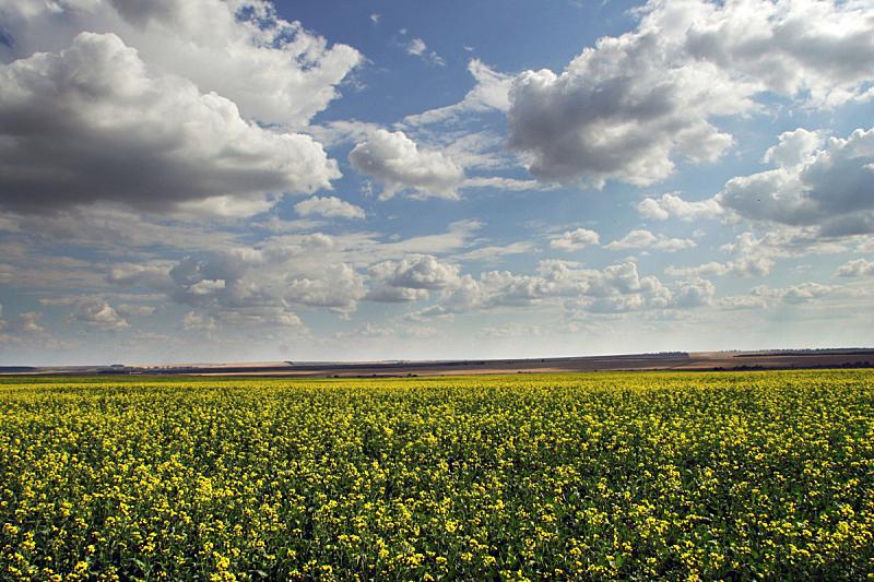 夏天,地形,鞑靼斯坦共和国,芸苔,水平画幅,户外,草,云景,俄罗斯,农业