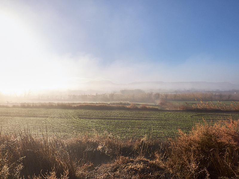 田地,雾,自然,天空,美,草地,水平画幅,绿色,地形,无人