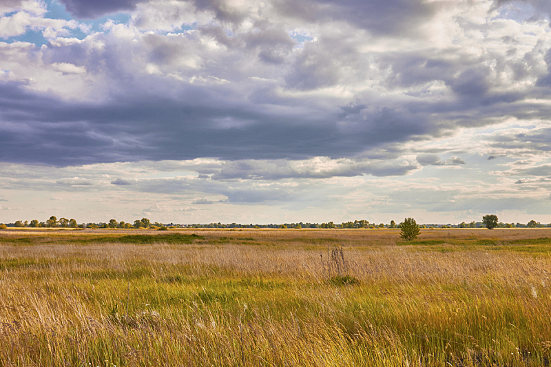 云,草,明亮,日光,白昼,背景,绿色,自然美,地形,黄色