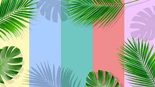 棕榈叶,夏天,黄色背景,概念,鸡尾酒,彩色背景,边框,热带气候,泰国,壁纸