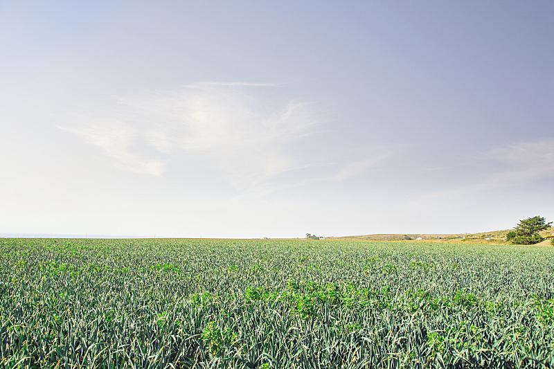 田地,绿色,农业,单一栽培,蔬菜,菜园,景观设计,环境,云,春天