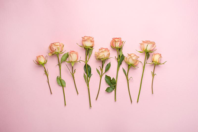 周年纪念,婚礼,礼物,抽陀螺,玫瑰,情人节,平铺,留白,背景聚焦,庆祝
