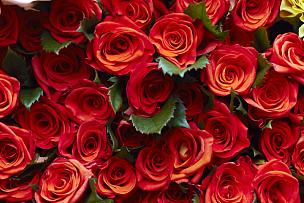玫瑰,自然,美,水平画幅,无人,浪漫,自然美,红色,韩国,植物