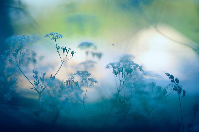 仅一朵花,草地,背景,梦想,选择对焦,野花,黎明,昆虫,季节,渴望