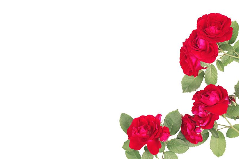 周年纪念卡,情人节,红色,玫瑰,春天,夏天,自然美,分离着色,排列,花