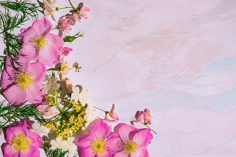 空白的,粉色,背景,贺卡,蜡笔画,野玫瑰,边框,水平画幅,无人,玫瑰