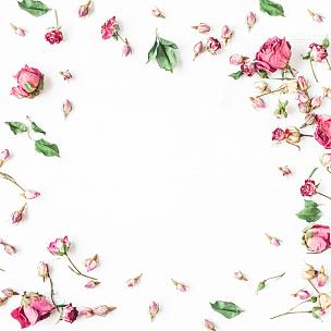 干的,仅一朵花,边框,玫瑰,视角,平铺,贺卡,留白,高视角,干花