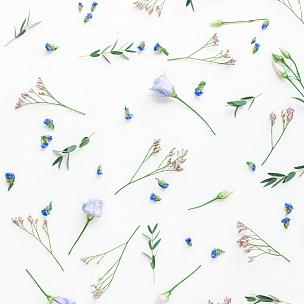 桉树,枝,式样,平铺,视角,lisianthus,雏菊,野花,国际妇女节,爱沙尼亚