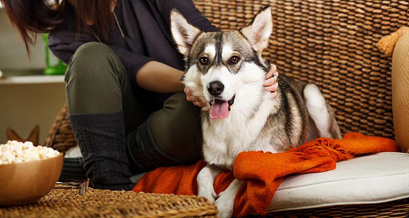 狗,沙发,可爱的,纯种犬,舒服,女人,小的,动物,住宅内部,犬科的