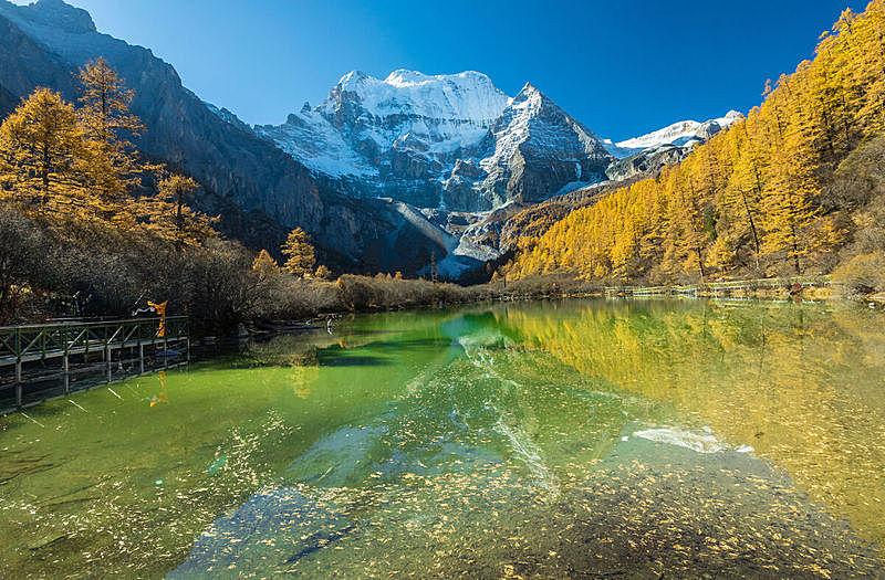 国内著名景点,雪,草,松树,背景,户外,天空,自然,黄色,季节