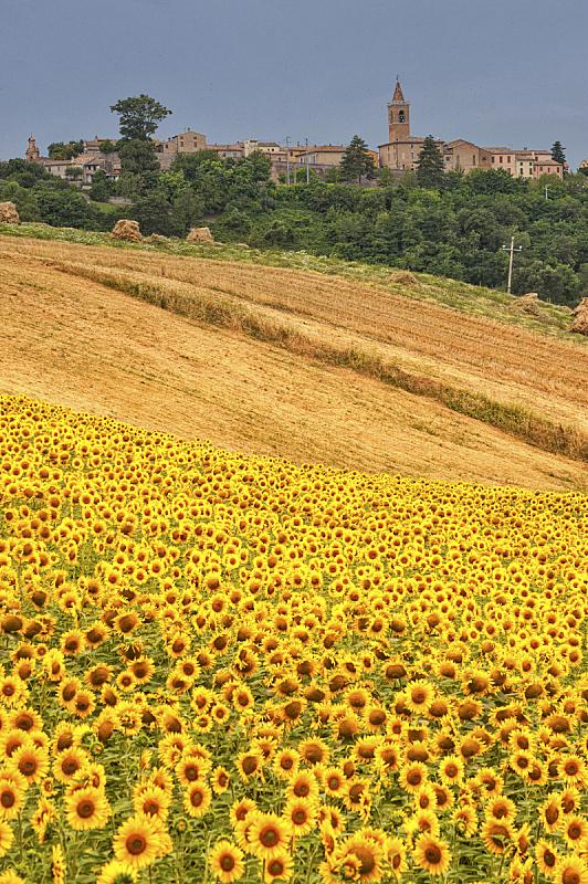 马尔凯大区,非都市风光,地形,意大利,垂直画幅,水平画幅,山,无人,夏天,户外