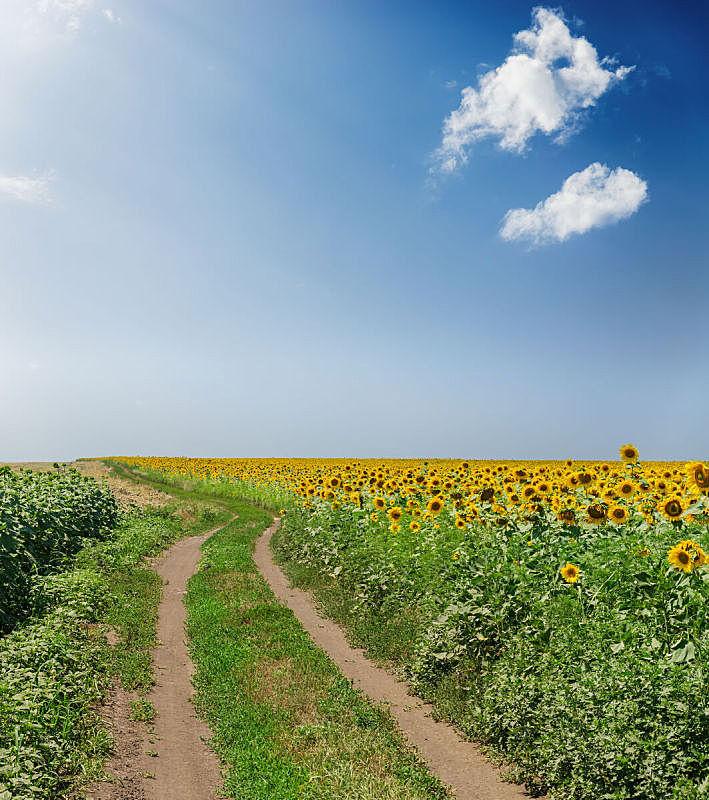 天空,云,田地,农业,蓝色,乡村路,在上面,垂直画幅,泥土,夏天